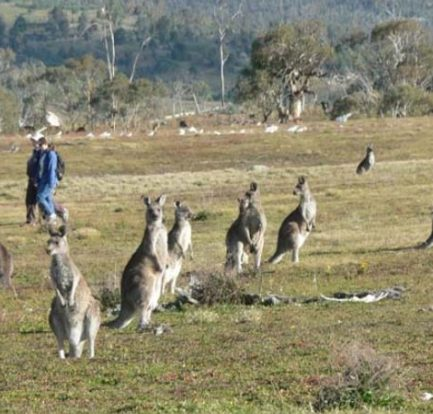 The Wildlife Of Kangaroo Island